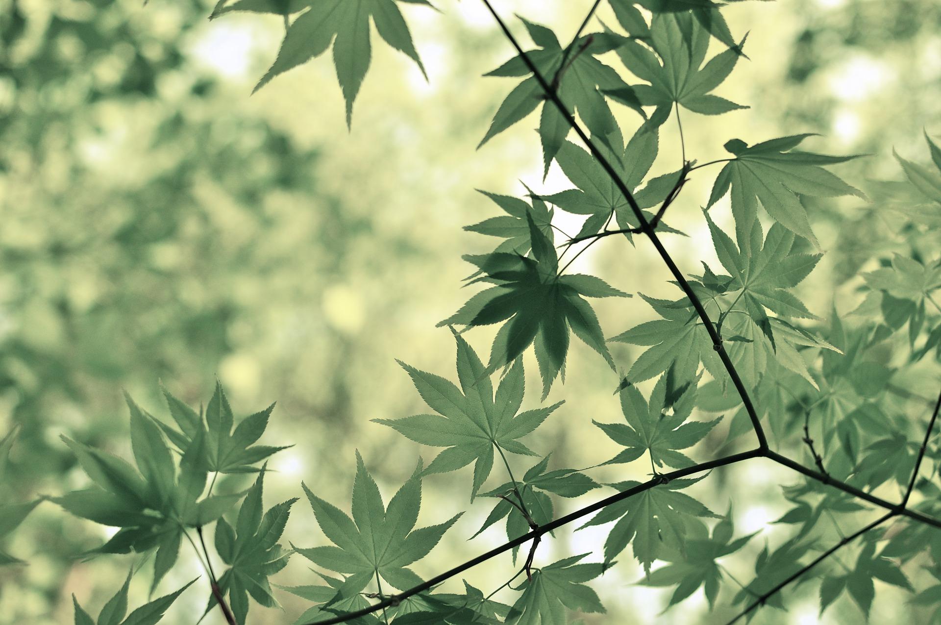 leaves-872059_1920