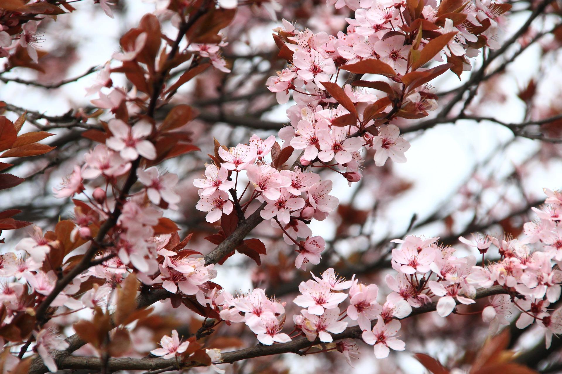 spring-2276402_1920